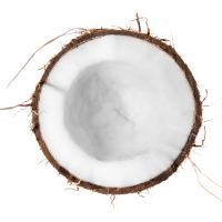 Coconut_600x600